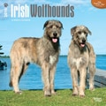 Browntrout Publishers 12in. x 12in. Irish Wolfhounds Wall Calendar