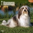 """Browntrout Publishers 12"""" x 12"""" Havanese Wall Calendar"""