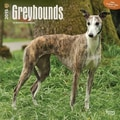 Browntrout Publishers 12in. x 12in. Greyhounds Wall Calendar
