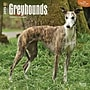 Browntrout Publishers 12 x 12 Greyhounds Wall Calendar