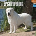 Browntrout Publishers 12in. x 12in. Great Pyrenees Wall Calendar