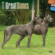 Browntrout Publishers 12 x 12 Great Danes Wall Calendar