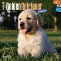 Browntrout Publishers 12in. x 12in. Golden Retriever Puppies Wall Calendar