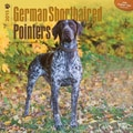 Browntrout Publishers 12in. x 12in. German Shorthaired Pointers Wall Calendar