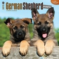 Browntrout Publishers 12in. x 12in. German Shepherd Puppies Wall Calendar