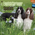 Browntrout Publishers 12in. x 12in. English Springer Spaniels Wall Calendar
