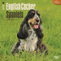 Browntrout Publishers 12in. x 12in. English Cocker Spaniels Wall Calendar