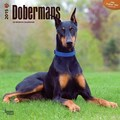 Browntrout Publishers 12in. x 12in. Dobermans Wall Calendar
