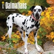 "Browntrout Publishers 12"" x 12"" Dalmatians Wall Calendar"