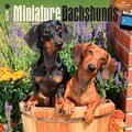 Browntrout Publishers 12in. x 12in. Miniature Dachshunds Wall Calendar