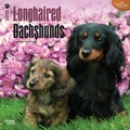 Browntrout Publishers 12in. x 12in. Longhaired Dachshunds Wall Calendar