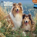 Browntrout Publishers 12in. x 12in. Collies Wall Calendar