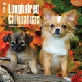 Browntrout Publishers 12in. x 12in. Longhaired Chihuahuas Wall Calendar