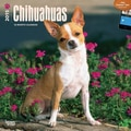 Browntrout Publishers 12in. x 12in. Chihuahuas Wall Calendar