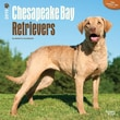 """Browntrout Publishers 12"""" x 12"""" Chesapeake Bay Retrievers Wall Calendar"""