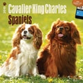 Browntrout Publishers 12in. x 12in. Cavalier King Charles Spaniels Wall Calendar