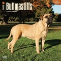 Browntrout Publishers 12in. x 12in. Bullmastiffs Wall Calendar