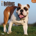 Browntrout Publishers 12in. x 12in. Bulldogs Wall Calendar
