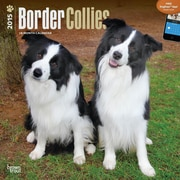 Browntrout Publishers 12 x 12 Border Collies Wall Calendar
