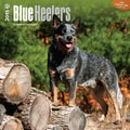 Browntrout Publishers 12in. x 12in. Blue Heelers Wall Calendar