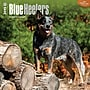 Browntrout Publishers 12 x 12 Blue Heelers Wall