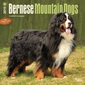 Browntrout Publishers 12in. x 12in. Bernese Mountain Dogs Wall Calendar