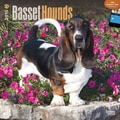 Browntrout Publishers 12in. x 12in. Basset Hounds Wall Calendar