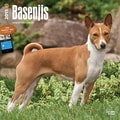 Browntrout Publishers 12in. x 12in. Basenjis Wall Calendar