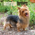 Browntrout Publishers 12in. x 12in. Australian Terriers Wall Calendar
