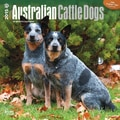 Browntrout Publishers 12in. x 12in. Australian Cattle Dogs Wall Calendar