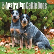 Browntrout Publishers 12 x 12 Australian Cattle Dogs Wall Calendar