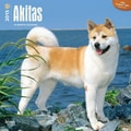 Browntrout Publishers 12in. x 12in. Akitas Wall Calendar