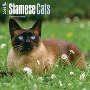 Browntrout Publishers 12 x 12 Siamese Cats Wall Calendar