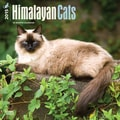 Browntrout Publishers 12in. x 12in. Himalayan Cats Wall Calendar