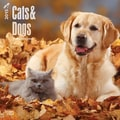 Browntrout Publishers 12in. x 12in. Cats Dogs Wall Calendar