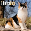 Browntrout Publishers 12in. x 12in. Calico Cats Wall Calendar