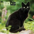 Browntrout Publishers 12in. x 12in. Black Cats Wall Calendar