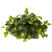 Nearly Natural 6708 Pothos Ledge Desk Top Plant in Pot