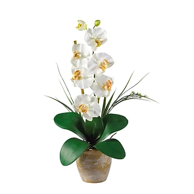 Nearly Natural 1016-CR Phalaenopsis Floral Arrangements, Cream