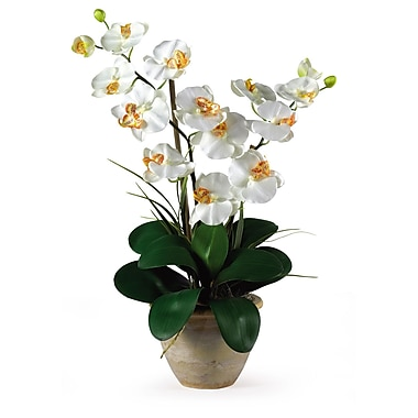 Nearly Natural 1026-CR Double Phalaenopsis Floral Arrangements, Cream