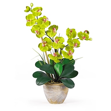 Nearly Natural 1026-GR Double Phalaenopsis Floral Arrangements, Green