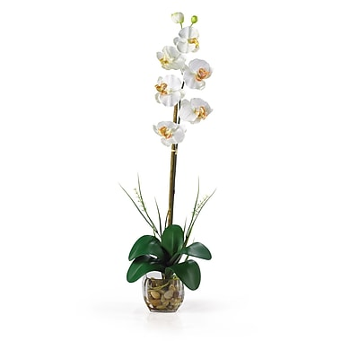 Nearly Natural 1104-CR Single Phalaenopsis Floral Arrangements, Cream