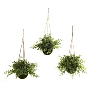 Nearly Natural 6741 Eucalyptus Maiden Hair Set of 3 Hanging Plant in Basket