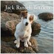 LANG® Avalanche Jack Russell Terriers 2015 Standard Wall Calendar