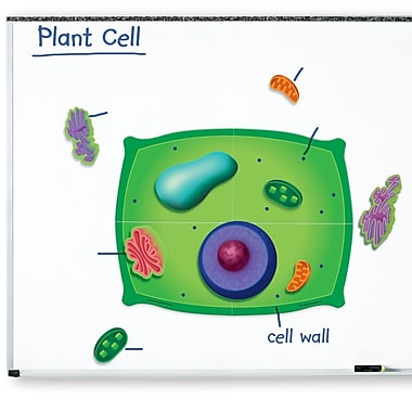 Learning Resources® Giant Magnetic Plant Cell