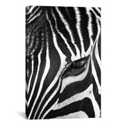 iCanvas 'Zebra Stare' by Bob Larson Photographic Print on Canvas; 18'' H x 12'' W x 0.75'' D