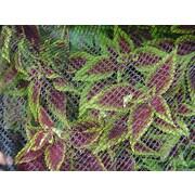 Dewitt BB720 Bird Barricade Protective Plant Netting, 7' x 20'