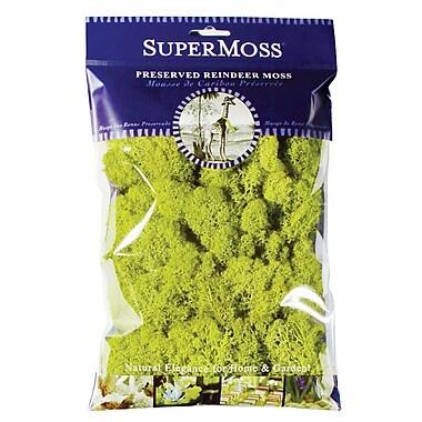 Super Moss 21708 Chartreuse Reindeer Moss, 2 oz.
