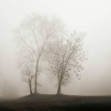Printfinders Four Trees in Fog by Nicholas Bell Photographic Print on Canvas; 24'' x 24''