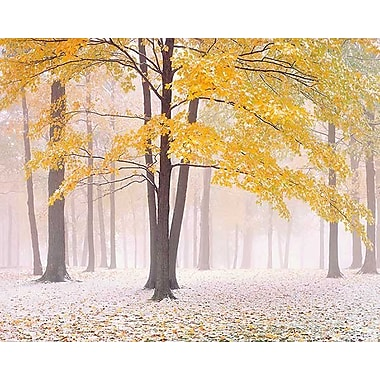 Printfinders Early Autumn Snow by Jim Becia Photographic Print on Canvas; 16'' x 20''